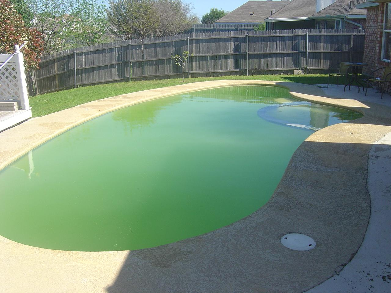 How Do I Protect My Pool From Algae Shoreline Pools