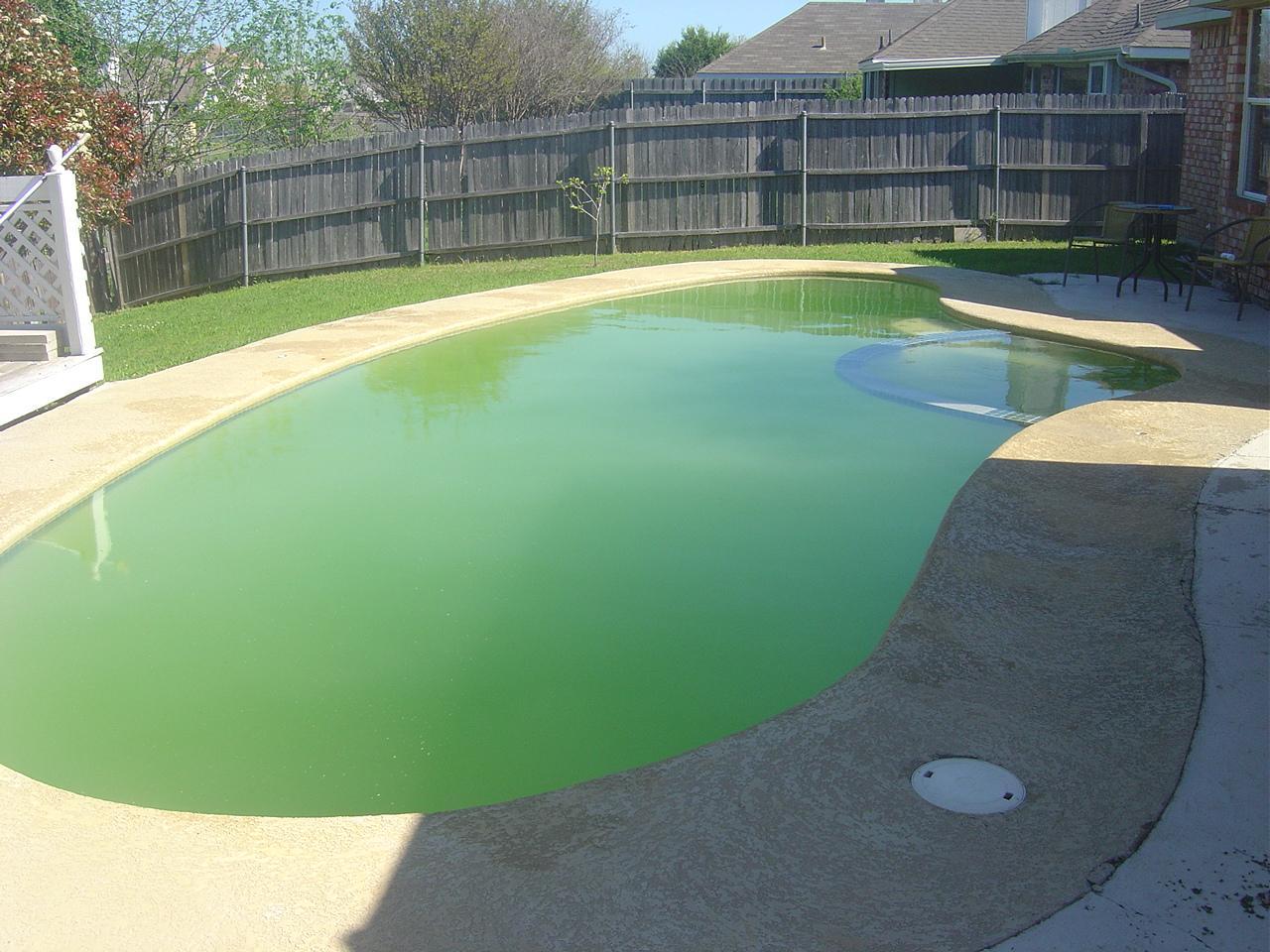 Pool Algae